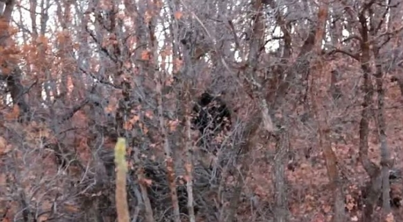 Bigfoot sighting in Utah goes viral - Gap Year